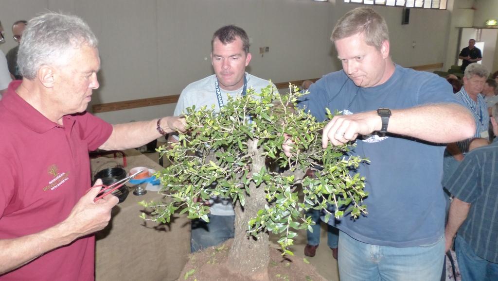 Tremendous Abc3 Edenvale South Africa 2013 Stone Lantern Bonsai Nursery Wiring Cloud Oideiuggs Outletorg