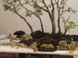 Gary Howes - note how the trees are tied down to keep them in place  - Water landscape demo Oyama Winterbash